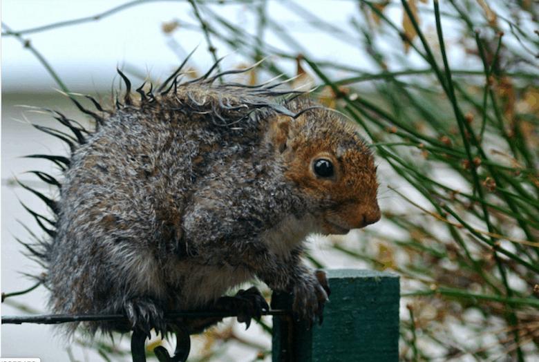 Murphy's Law wet squirrel